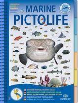 marine pictolife caraibes